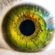 Neuroprotective cell/drug therapies for ocular injuries